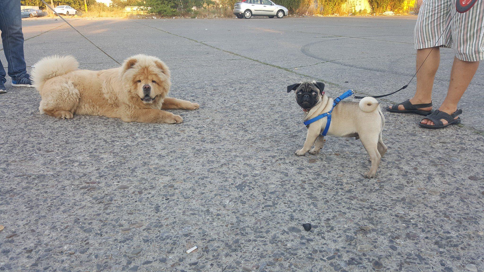 Ședințe GRATUITE de dresaj canin!