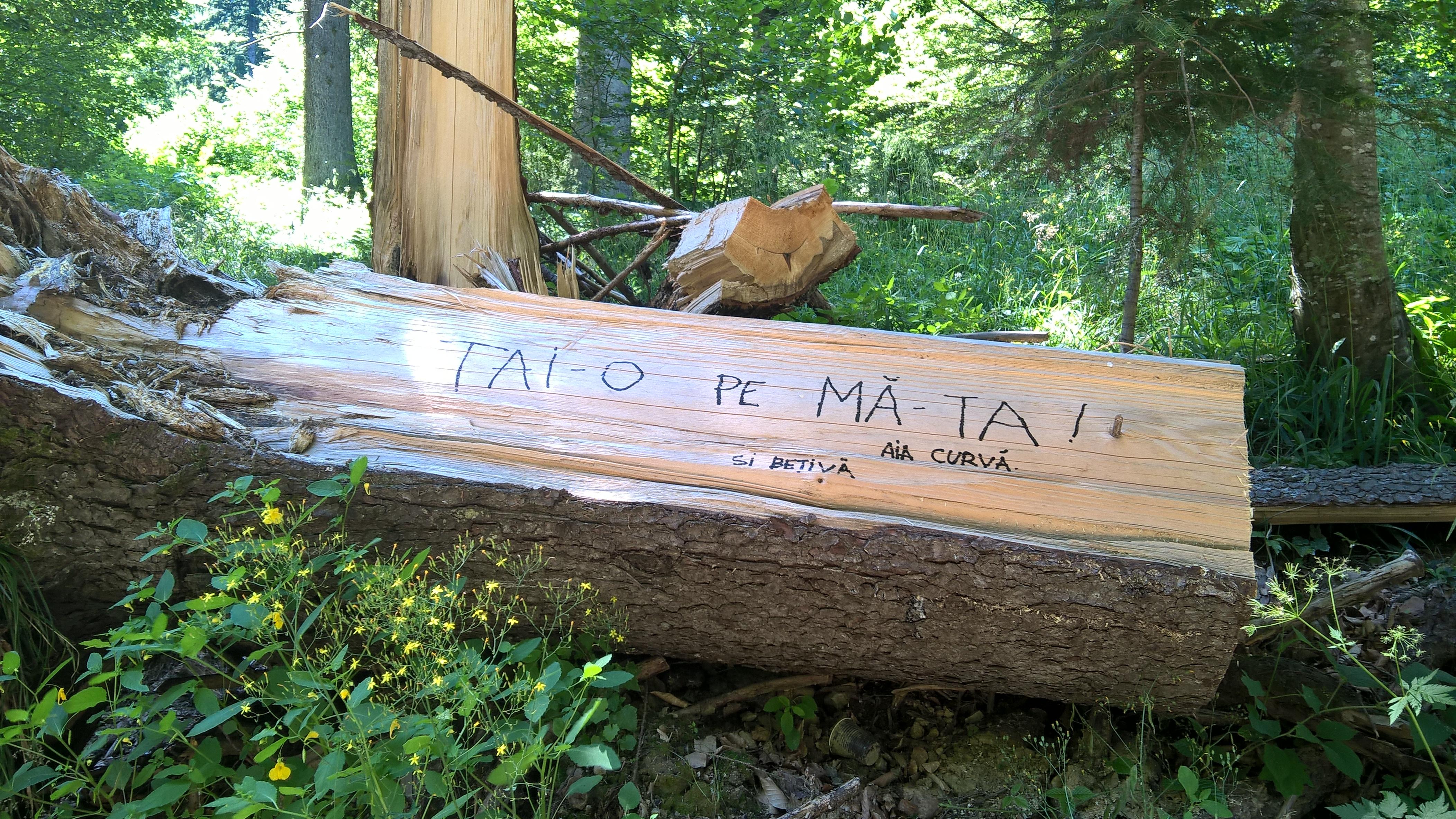 Investigație despre cum ne sunt furate pădurile – Rise Project